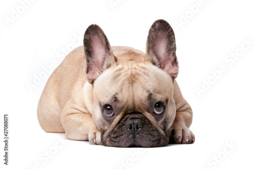 Stickers pour portes Bouledogue français french bulldog