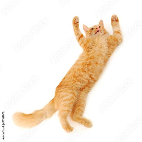 Fotografia, Obraz  kitten jumping
