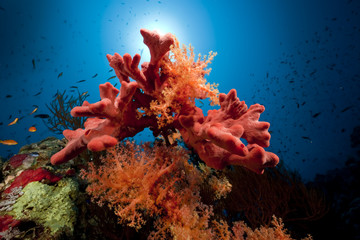 Fish, coral and ocean