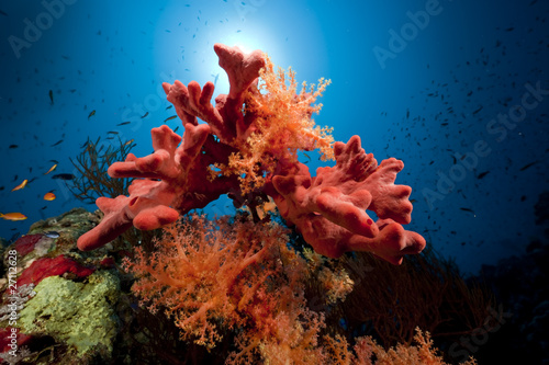 Photo  Fish, coral and ocean