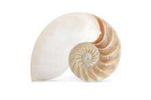 Nautilus Shell And Famous Geometric Pattern