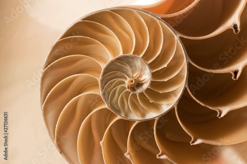 Foto close up nautilus shell pattern