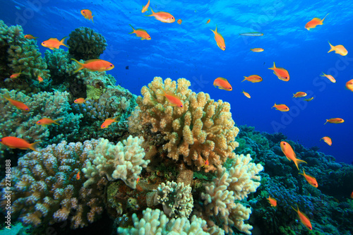 Poster Under water Coral Reef and Tropical Fish