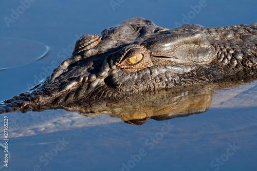 Papiers peints Crocodile Saltwater crocodile, Kakadu N/P, Australia