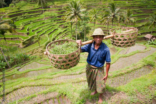 Foto op Aluminium Bali Rice farmer