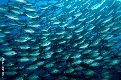 Fényképezés banc de poissons 01