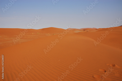 Foto op Aluminium Koraal Wüste