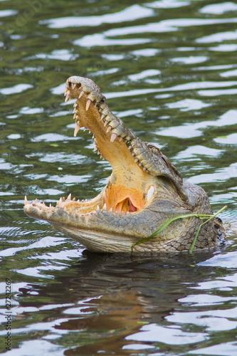 Printed kitchen splashbacks Crocodile Crocodile de Bandia