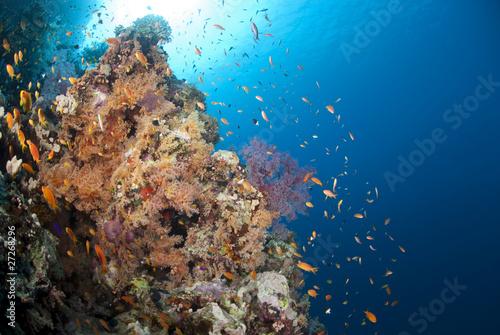 Staande foto Koraalriffen Vibrant and colourful underwater tropical coral reef scene.