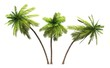 Leinwandbild Motiv 3x 3D Kokosnusspalmen freigestellt
