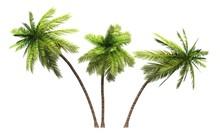 3x 3D Kokosnusspalmen Freigest...