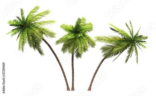 3x 3D Kokosnusspalmen freigestellt Canvas Print