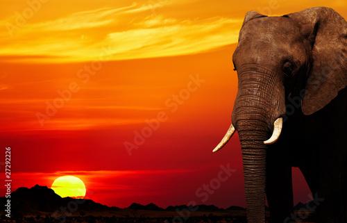 Obrazy na płótnie Canvas African elephant at sunset