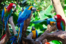 Group Parrots