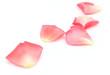 canvas print picture - Petals