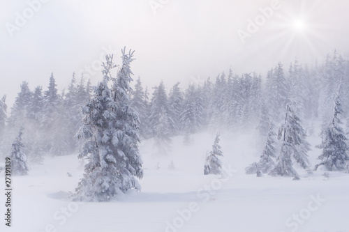 snowstorm in the Carpathian mountains Wallpaper Mural