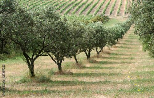 Keuken foto achterwand Olijfboom Champ d'oliviers