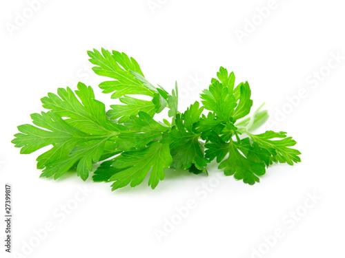 Fototapeta Fresh parsley on white background. obraz