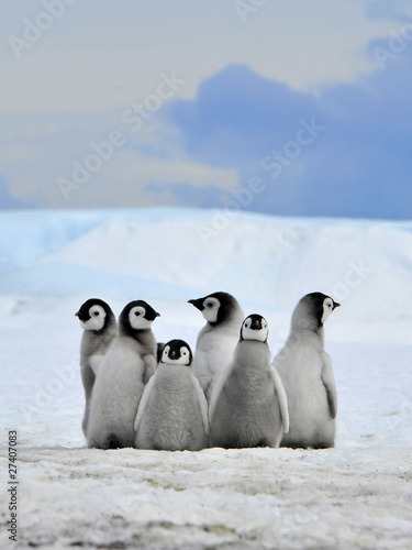 Door stickers Antarctic Emperor Penguin