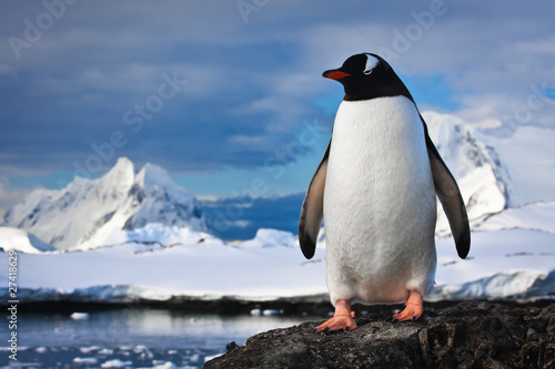 Poster Antarctic penguin on the rocks