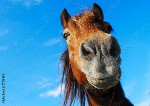 Foto op Canvas Paarden Neugierig