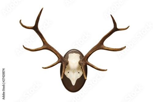 antlers of a huge stag, mounted on a wooden plate Fototapeta