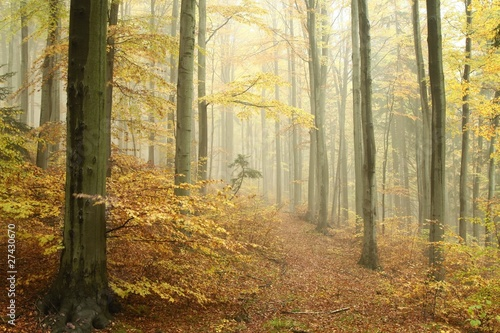 Foto auf Acrylglas Wald im Nebel Path in misty autumn forest in a nature reserve