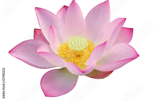 Garden Poster Lotus flower Majestic Lotus flower