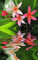 Panel Szklany Podświetlane Egzotyczne Plumeria flowers