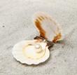 conchiglia con perla