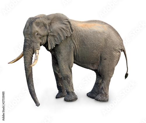 Foto op Aluminium Olifant elephant isolated