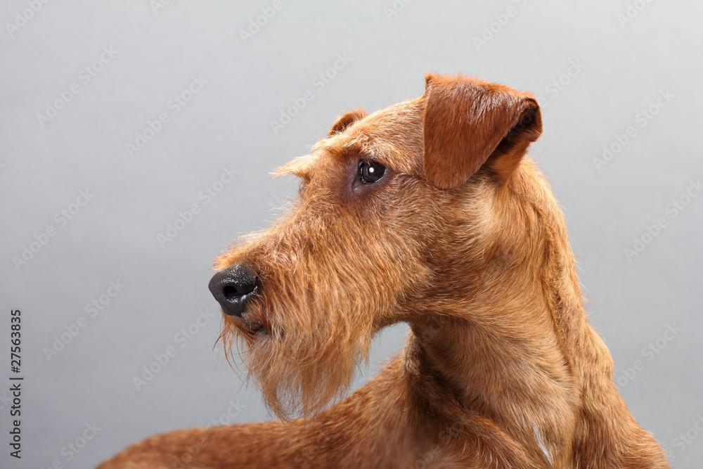 Irish Terrier Pot
