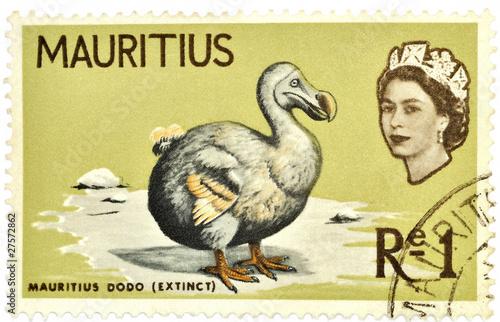 Photo  timbre, dodo