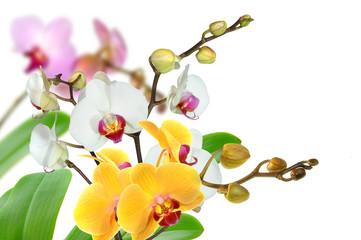 Panel Szklany Podświetlane Do łazienki Orchideen 95