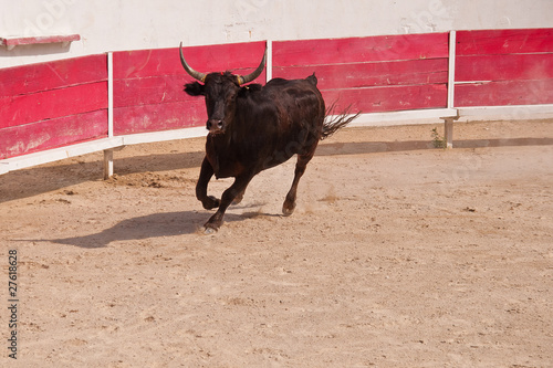 Foto op Canvas Stierenvechten corrida paesana