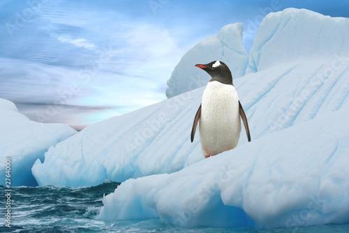 Tuinposter Pinguin Eselspinguin (Antarktis) - Gentoo Penguin (Antarctica)