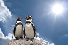 Pinguin Himmel