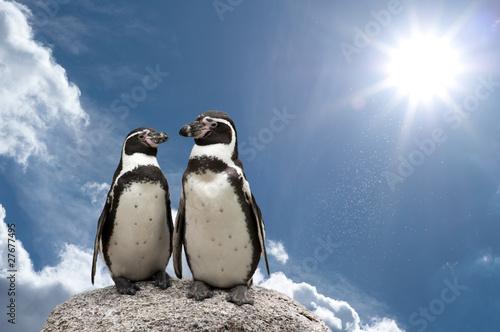 Papiers peints Pingouin pinguin himmel