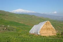 Yellow Barn, Green Pasture And White Volcano Etna