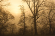 canvas print picture - morgenstimmung
