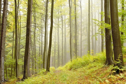 Foto auf Acrylglas Wald im Nebel Lane running through autumn woods on a foggy morning