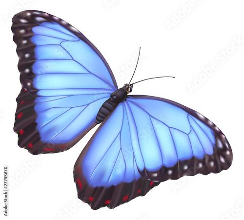 Fototapeta Blue morpho butterfly