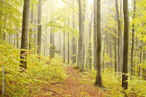 Foto auf Acrylglas Wald im Nebel Mountain trail in the misty autumn forest in a nature reserve