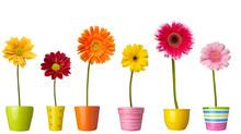 Flower Nature Garden Botany Daisy Bloom Pot