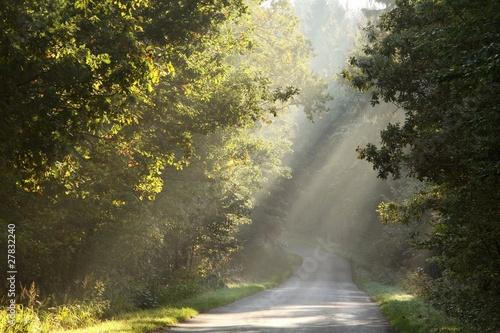 Foto auf Acrylglas Wald im Nebel Rural road through the misty autumn forest at sunrise