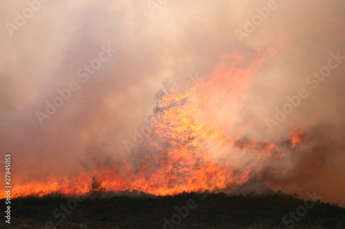 Photo Stands Roe Frensham Heath Fire