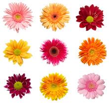 Flower Nature Garden Botany Daisy Bloom