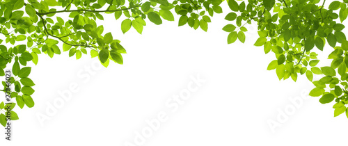 Fotografía  Green Leaves border