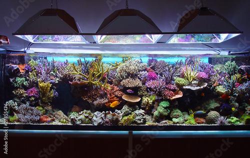 Fotografie, Obraz  marine aquarium