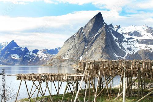 Wall Murals Arctic stockfish under Hamnøy's mounts